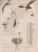 ANIMALES-Las-aves--2