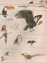 ANIMALES-las-aves-1