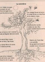 PLANTAS-La-siembra-1