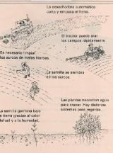 PLANTAS-La-siembra-2