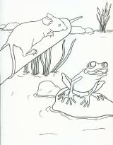 friendfrogcoloringbook2